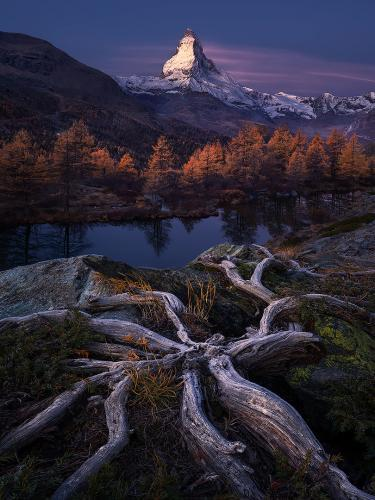 The roots of eternity by Isabella Tabacchi